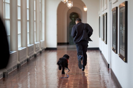 "President Barack Obama runs down the East Colonnade with family dog ""Bo."" 3/15/09 Official White House Photo by Pete Souza"