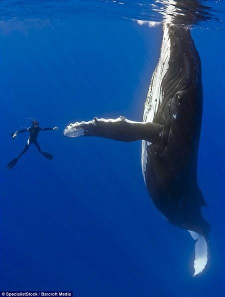 man meets humpback